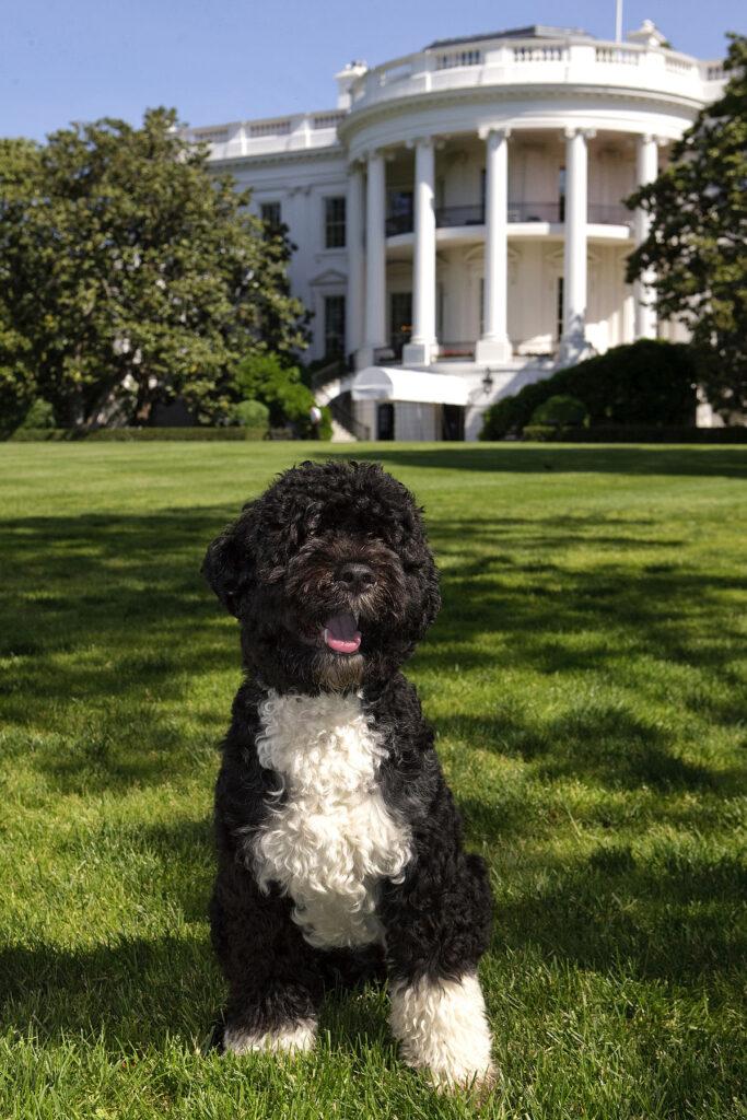 Bo Obama - my future BFF