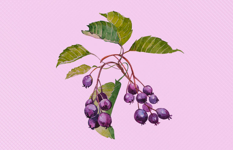 Juneberry Trailmix